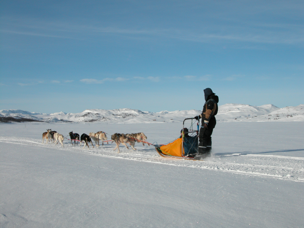 Hundekjøring i Hallingdal, Hol, Geilo, Bergsjø, Ål, Gol, Golsfjellet, Hemsedal, Nesbyen, Flå