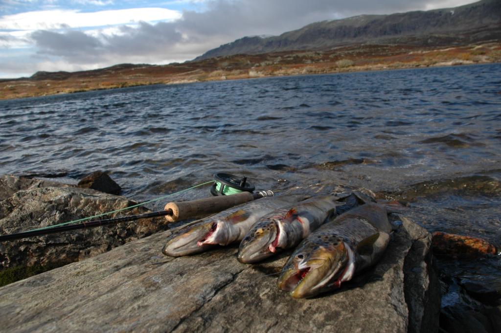 Fluefisking, fisking, Hemsedal, Heimsila, Gol, Golsfjellet, Hallingdal, Ål, Geilo, Hol, Nesbyen, Flå, ørretens rike